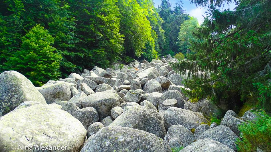 Hiking to Golden bridges, Vitosha 11