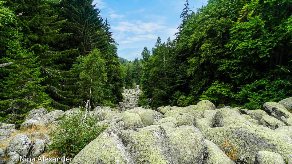 Hiking to Golden bridges, Vitosha 26