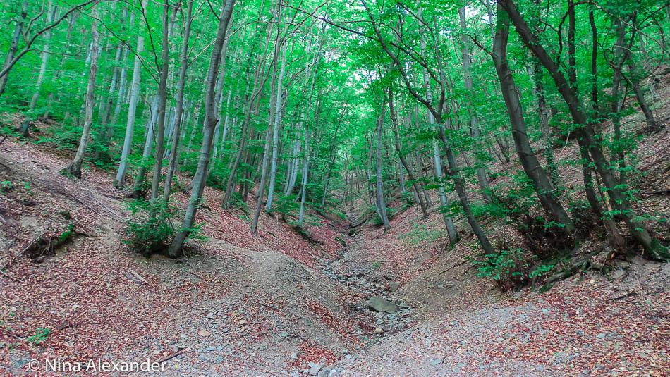 Hiking to Golden bridges, Vitosha 44