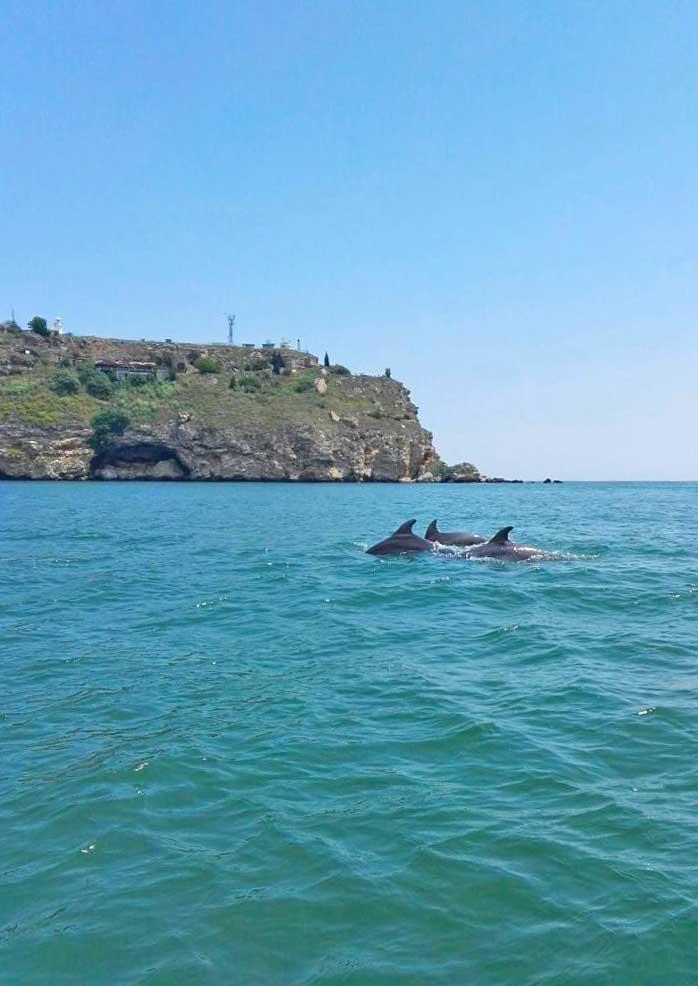 Dolphins in Kavarna!