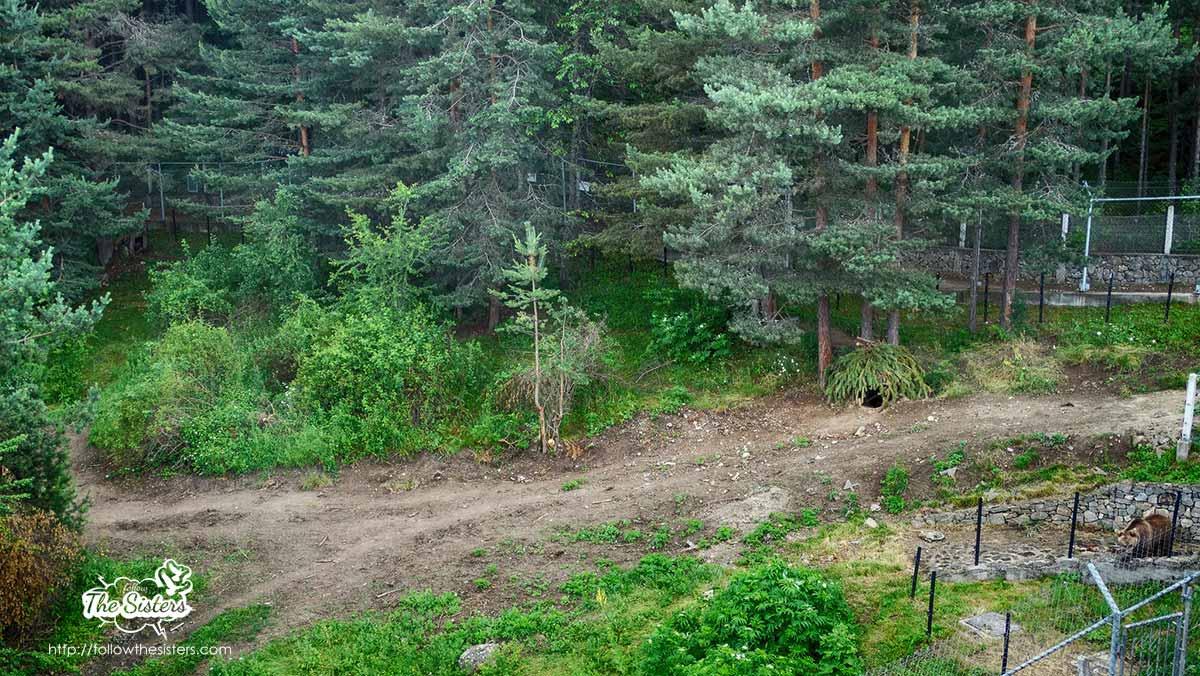 Dancing bears Belitsa park: human-made bear den