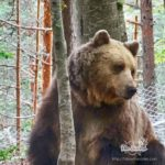 Dancing bears park Belitsa
