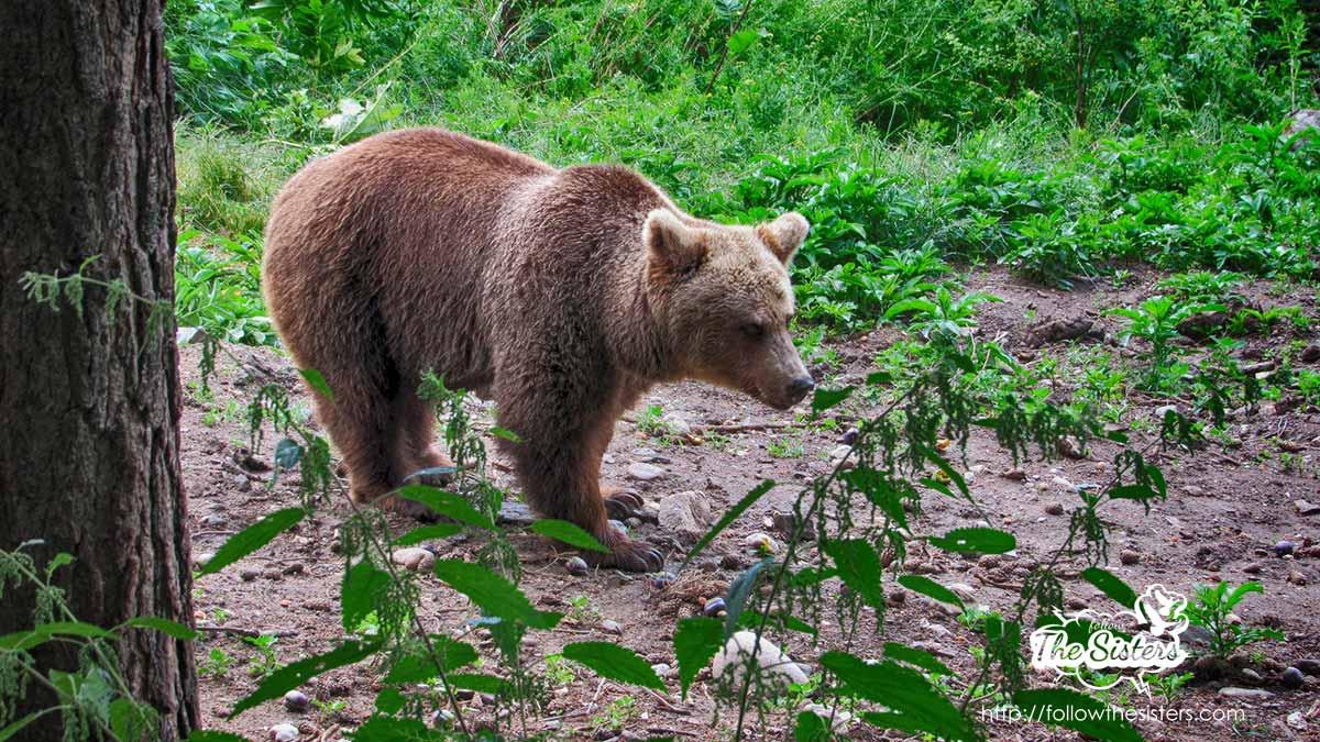 New life for the bears in Belitsa