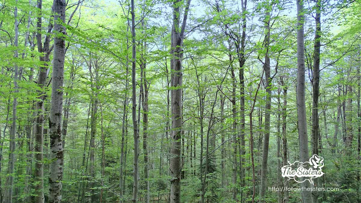 The magical forest around the cave of St Ivan Rilski