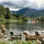 the ducks in park Rila, Dupnitsa