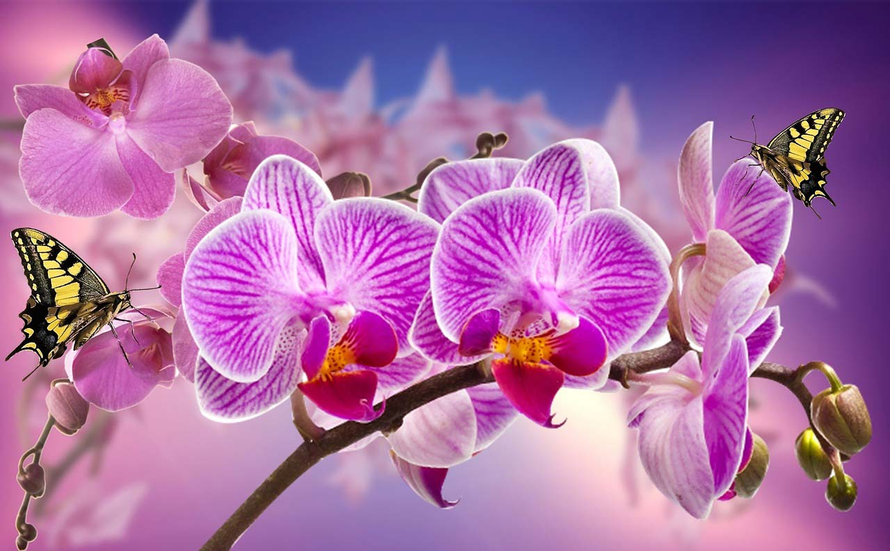When appropriate send purple orchids
