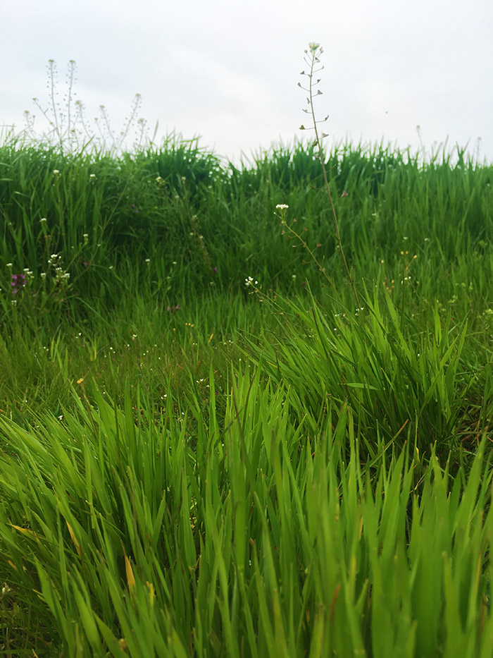 Green fields around Zhitari